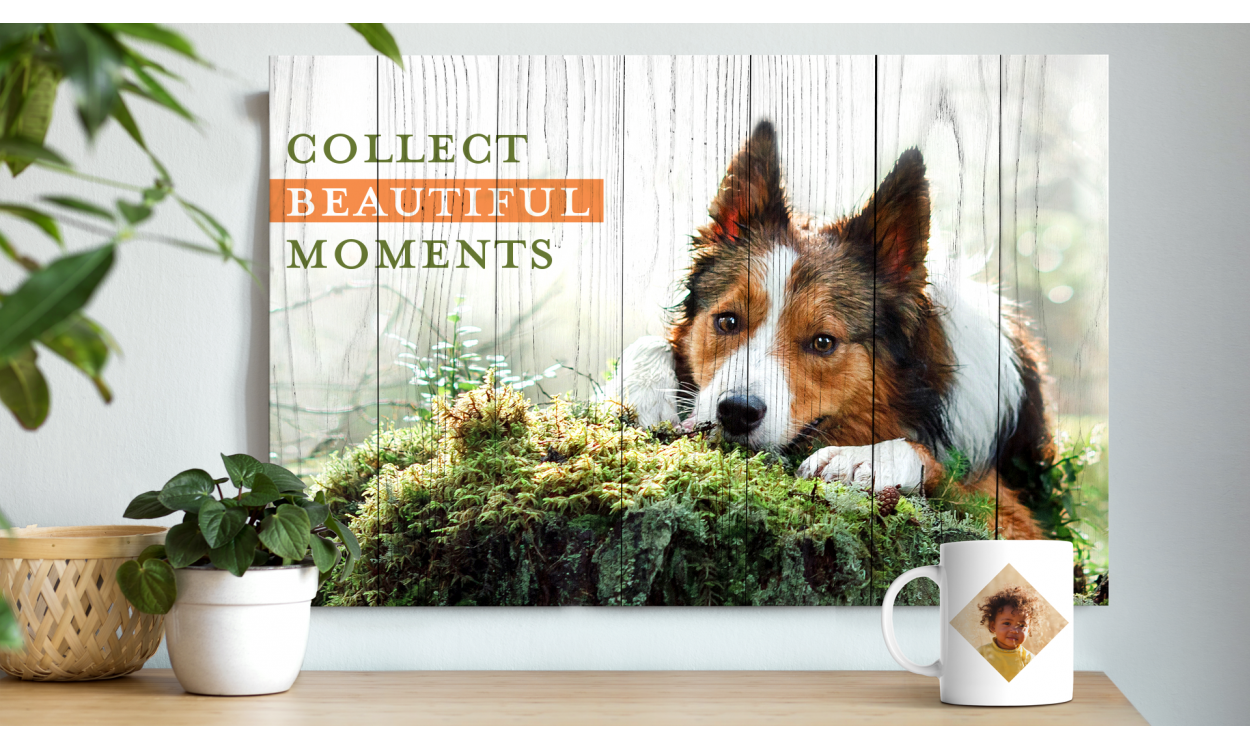 Adobe Photoshop + Premiere Elements 2021 | Windows | Multilingua