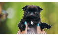 Adobe Photoshop Elements 2021 | Mac | Meertalig
